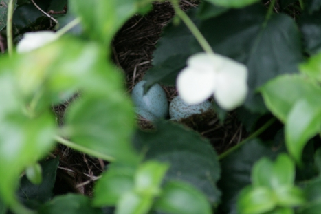 Nest Merel